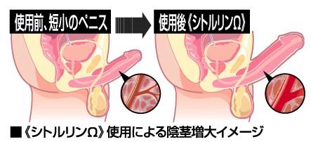シトルリン陰茎増大イメージ画像